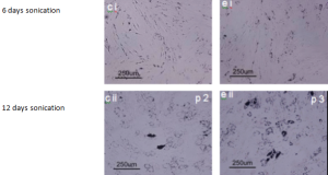 StemCellViabilityFat2 300x160 Cell Differentiation Studies