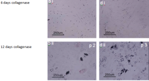StenCellViabilityFat1 300x164 Cell Differentiation Studies